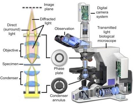 func microscopio